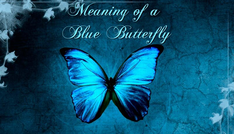 The Meaning Of A Blue Butterfly Spotting A Butterfly