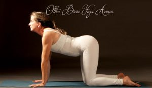 other basic yoga asanas  basic yoga poses  spiritual