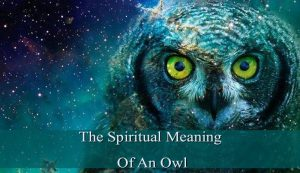 Spiritual Meaning Of An Owl