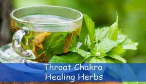 Throat Chakra Healing Herbs - Spiritual Experience