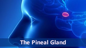 The Pineal Gland 1