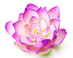 5 yoga symbols explained om lotus flower spiritual experience lotus flower it is a very powerful symbol which represents the divine within us the lotus flower has its roots in the mud being a symbol for us living mightylinksfo