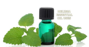 melissa essential oil uses