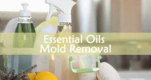 Essential Oils Mold Removal
