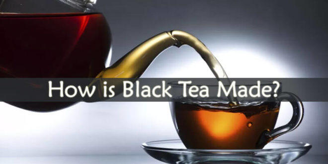 How is Black Tea Made