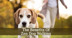 Zen Dog Walking