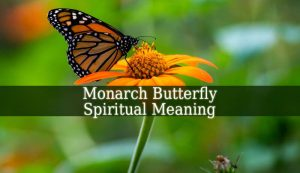 Monarch Butterfly Spiritual Meaning