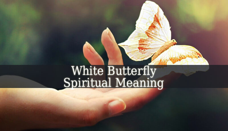 White Butterfly Spiritual Meaning Spiritual Experience
