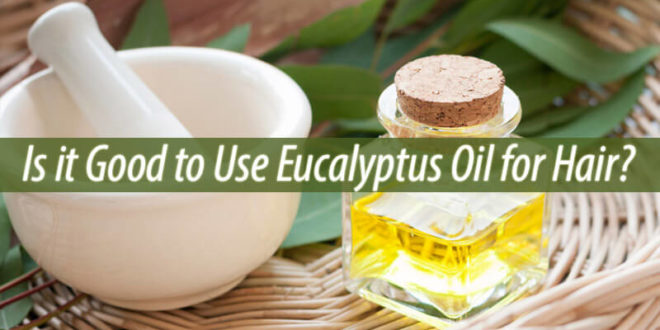eucalyptus oil for hair