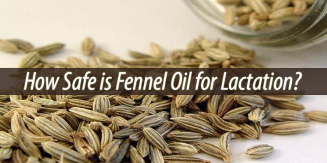 fennel oil for lactation