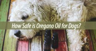 oregano oil for dogs