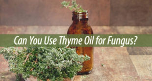 thyme oil for fungus
