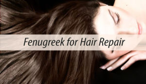 Fenugreek for Hair Repair