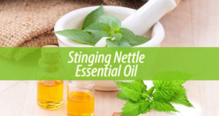 Stinging Nettle Essential Oil