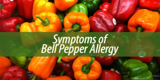 bell pepper allergy