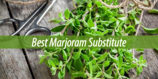 substitute for marjoram