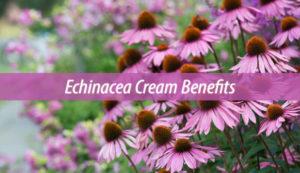 echinacea cream benefits