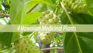 hawaiian medicial plants