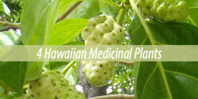 Hawaiian Medicinal Plants