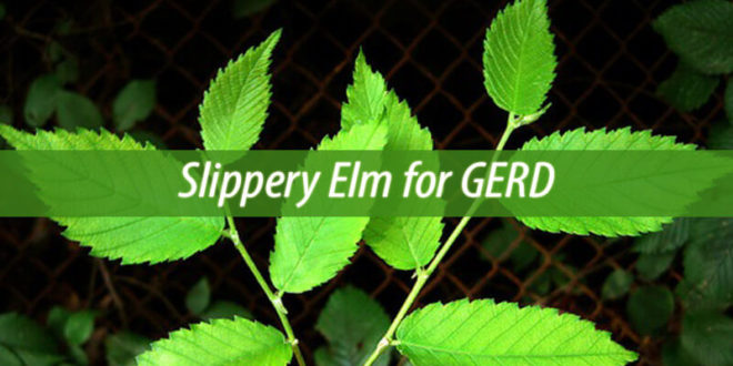 slippery elm for gerd