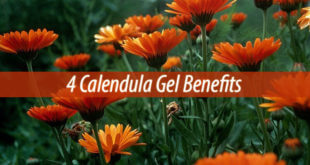 4 Calendula Gel Benefits