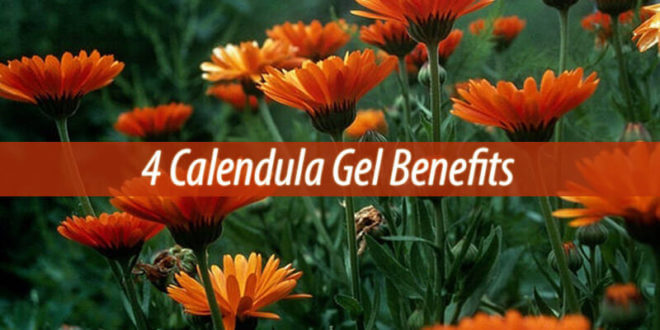 4 Calendula Gel Benefits