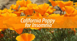 California Poppy for Insomnia
