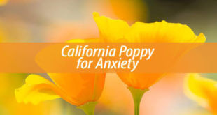 California Poppy for anxiety