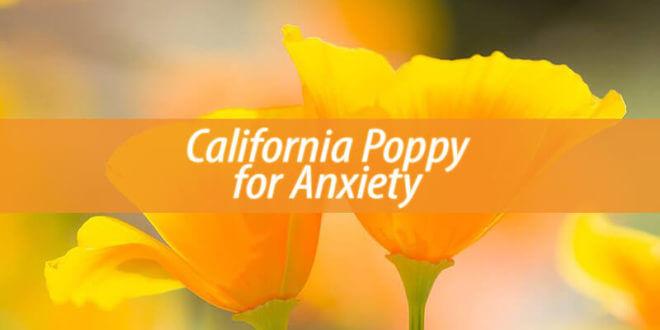 California Poppy for anxiety