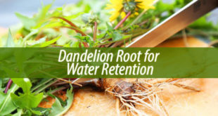 Dandelion Root for Water Retention
