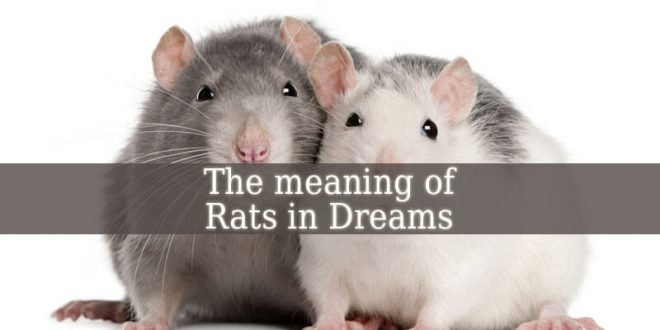 Dream Of Rats Meaning