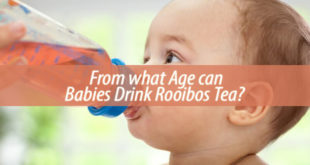 From what Age can Babies Drink Rooibos Tea