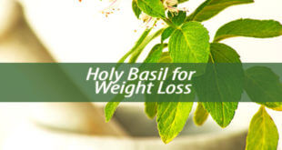 Holy Basil for Weight Loss