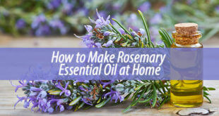 How to Make Rosemary Essential Oil at Home