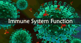 Immune System Function
