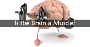 Is the Brain a Muscle