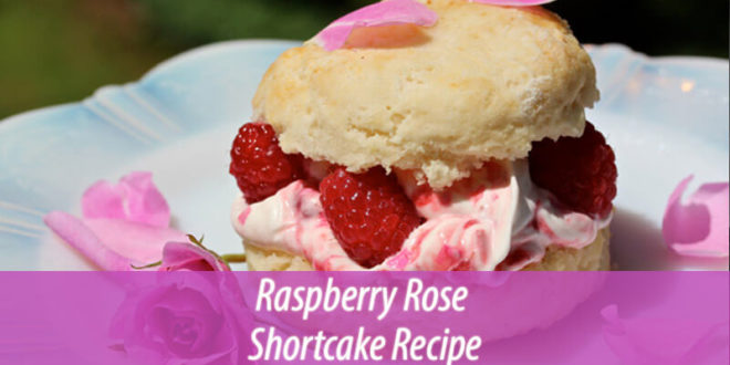 Raspberry rose shortcake recipe