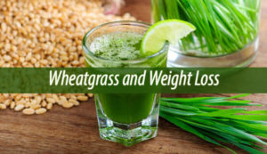 Wheatgrass and Weight Loss