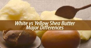 White vs Yellow Shea Butter