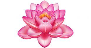 buddhist symbol lotus flower