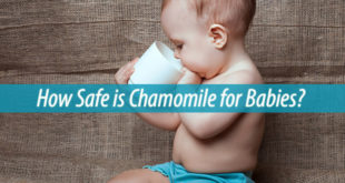 chamomile for babies