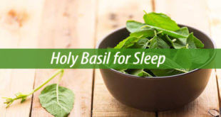 holy basil for sleep