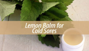 lemon balm for cold sores