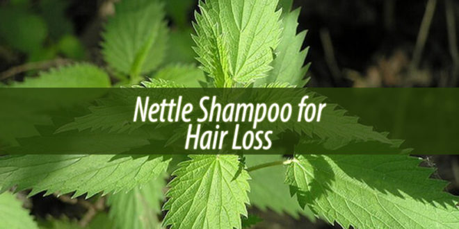 nettle shampoo for hair loss