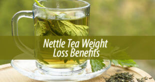 nettle tea weight loss