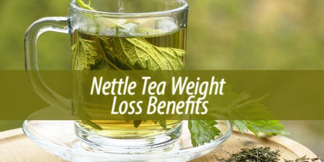 nettle tea weight loss
