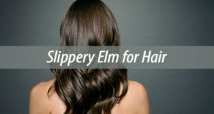 slippery elm for hair