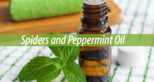 spiders and peppermint oil