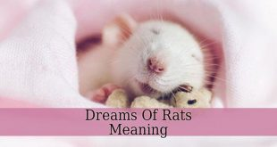 Dreams Of Rats Meaning