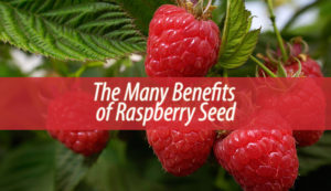 The Many Benefits of Raspberry Seed